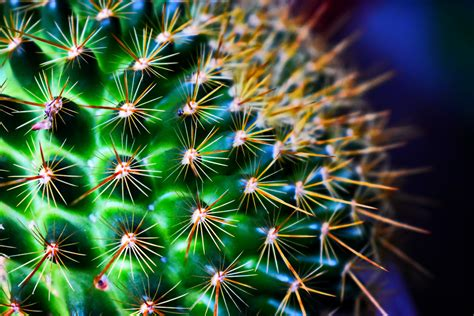 cactus, Green, Flowers Wallpapers HD / Desktop and Mobile