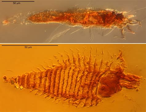 230-million-year-old Insects Found in the Italian Alps