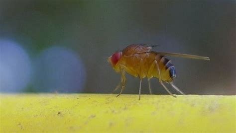 Get Rid of Flies and Gnats: 10 Gnatural Tips to a Bug-Free