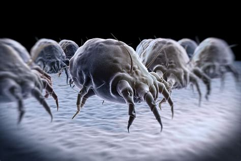 How To Get Rid Of Dust Mites Naturally In Your Bedroom
