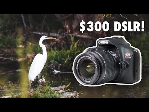 Canon EOS Rebel T6 | Best Point-and-Shoot Camera - The