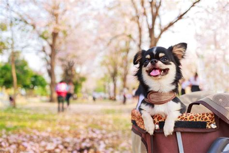 How to Train Your Dog to Behave in Public